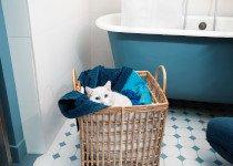 Colliers anti puces Seresto pour chiens et chats