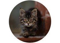 Catégorie compotement et éductaion chats